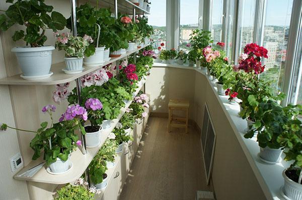 полки для цветов на балконе
