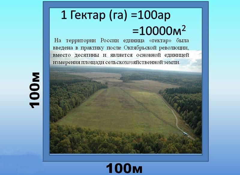 использование термина гектар в России