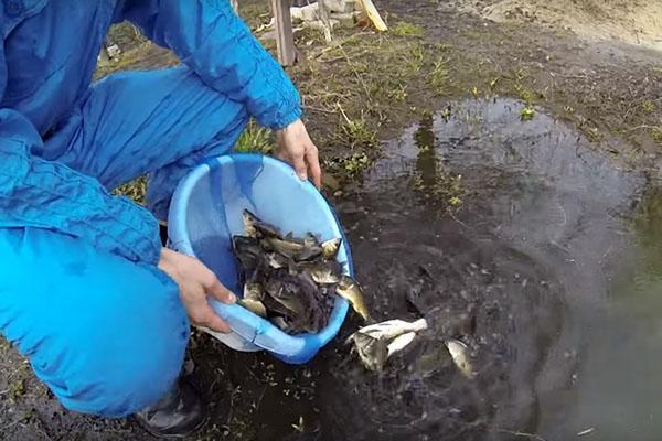 запускаем рыбу в пруд