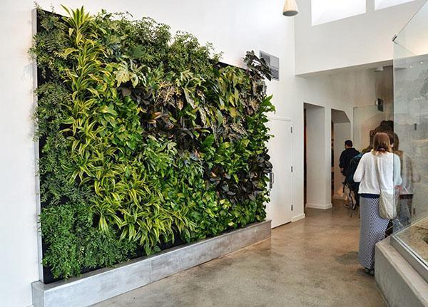 современная живая стена