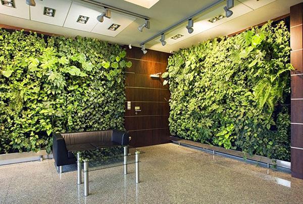живые стены из разных растений