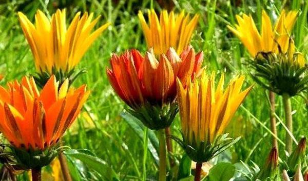 цветок любит солнечные лучи