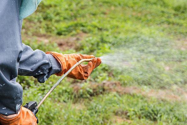 обработка амброзии химикатами