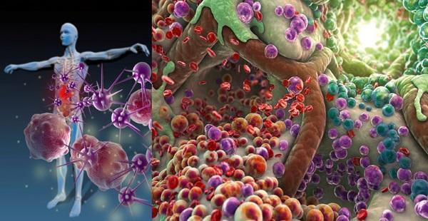 Иммуностимулирующее и антибактериальное действие морса