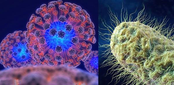 вирус гриппа и бактерии побеждает облепиха с медом