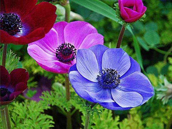 удивительные цветы сада