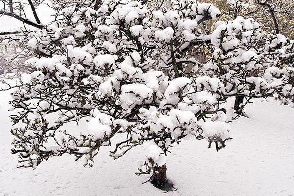 выпал обильный снег