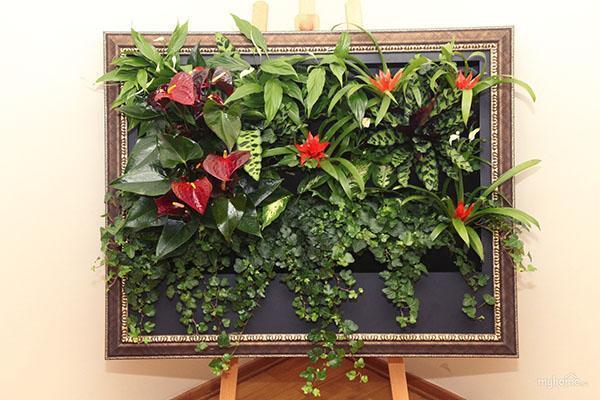 живой модуль из комнатных растений