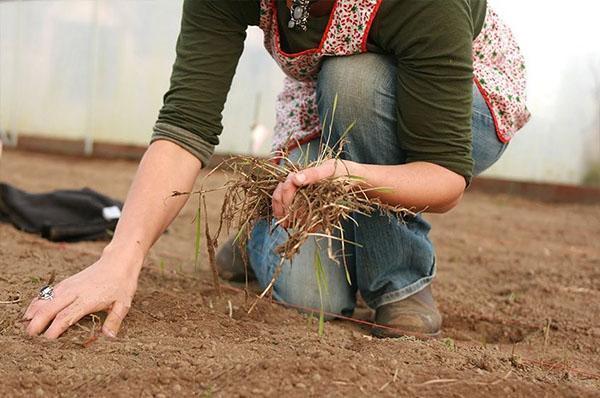 чистка грядок от сорняков