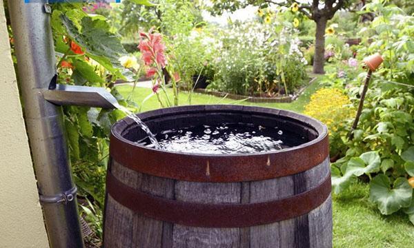 вода для полива растений