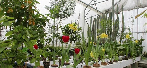 гидропоника для выращивания цветов