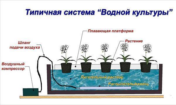 типичная система гидропоники