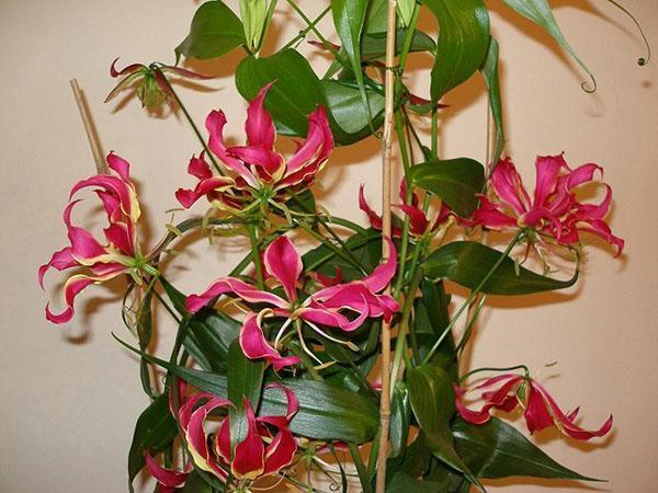 растению нужна опора