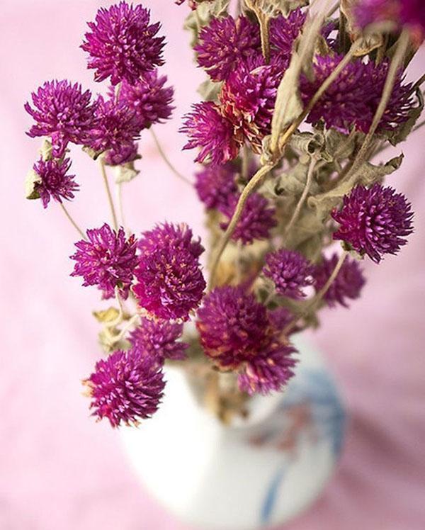 сухие цветы гомфрены