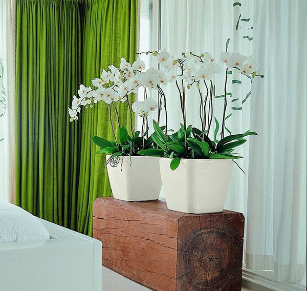 орхидеи в горшках с автополивом
