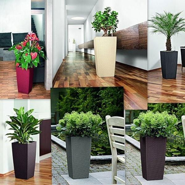 растения в горшках с автополивом