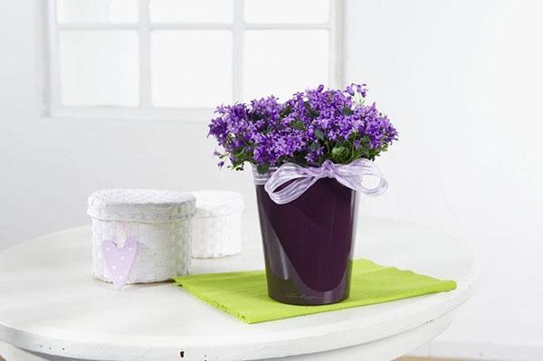 цветочный оазис в квартире