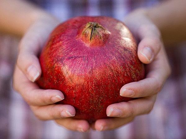 плотный упругий плод