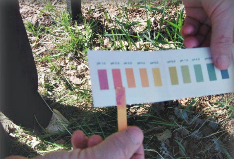 проверка почвы на кислотность