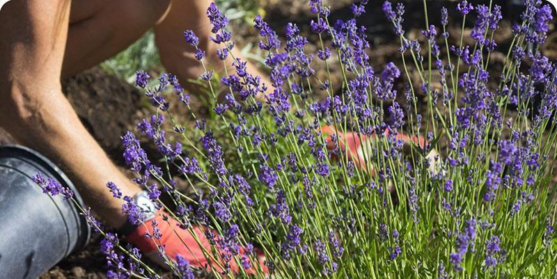 внесение удобрений в период цветения