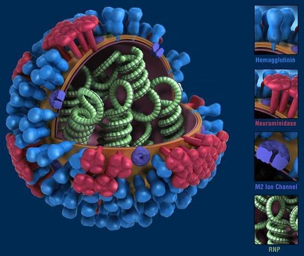масло гвоздики в борьбе с вирусом гриппа
