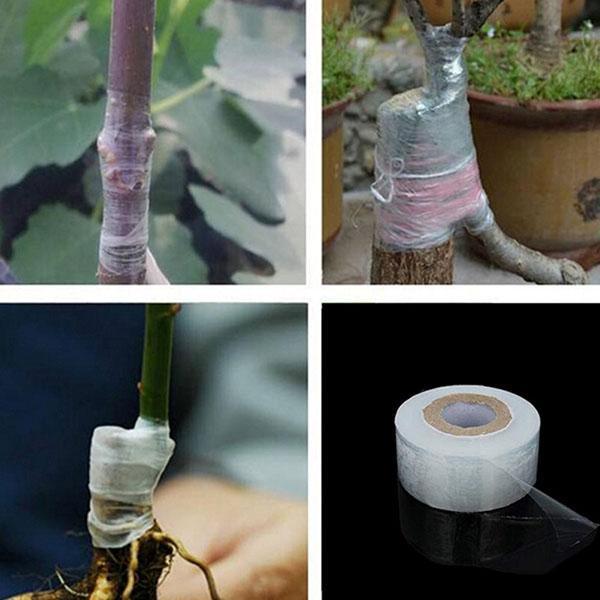 процесс прививки деревьев