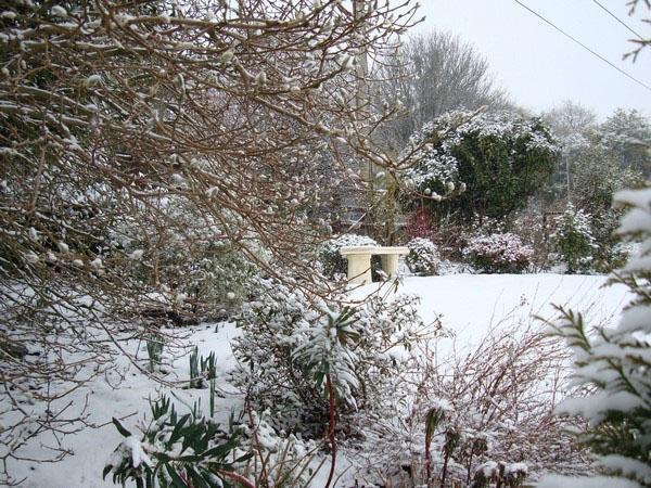 сад под слоем снега