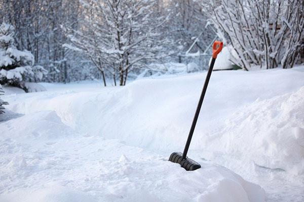 укрываем кустарники снегом