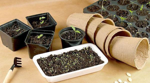 выращивание рассады на мини-грядках