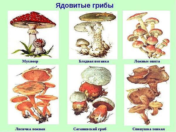 опасные для здоровья грибы