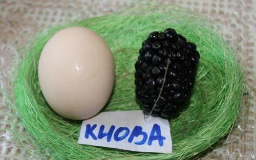Ежевика киова описание и характеристика сорта посадка и уход размножение
