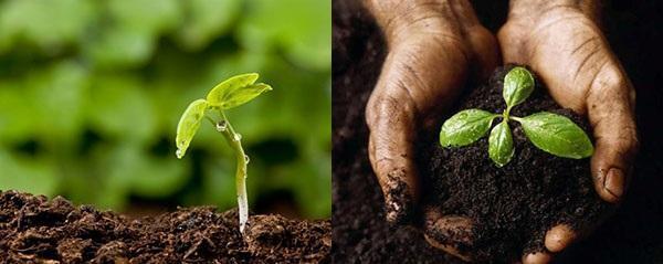 урожайность почвы