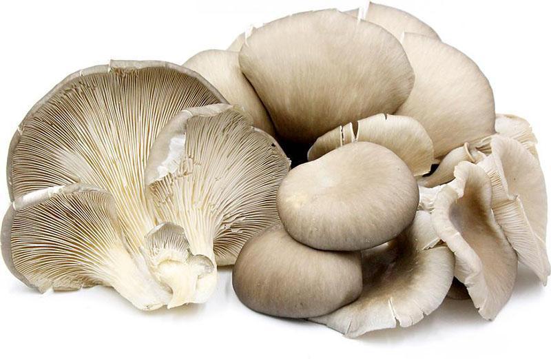 целые неповрежденные грибы