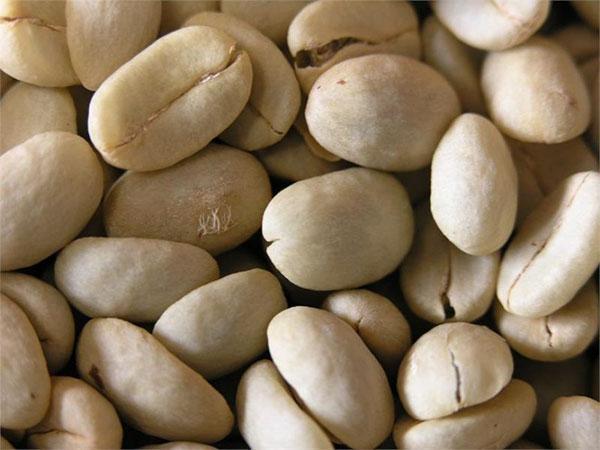 зерна кофейного дерева