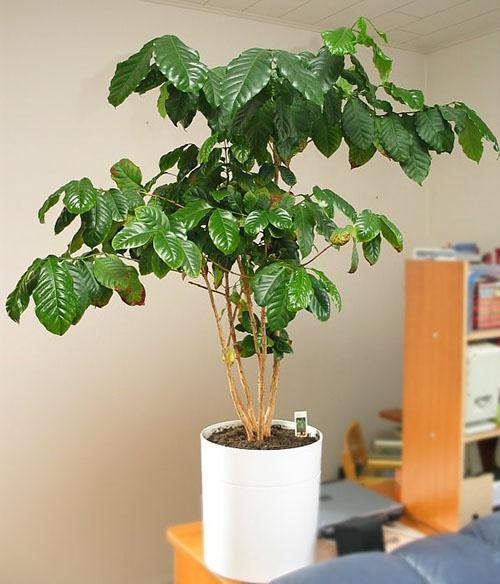 растению необходимо заботливый уход
