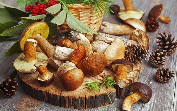 грибы из леса