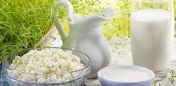 кисломолочные продукты из молочного гриба