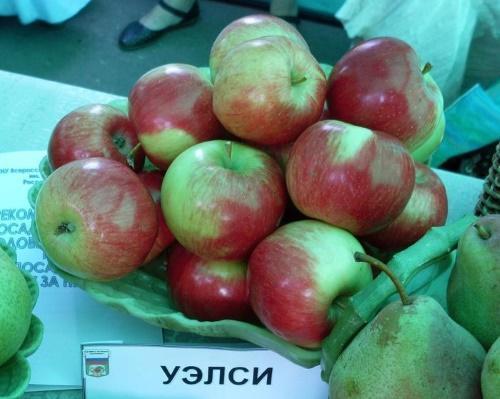 плоды уэлси