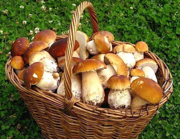 результат похода за грибами