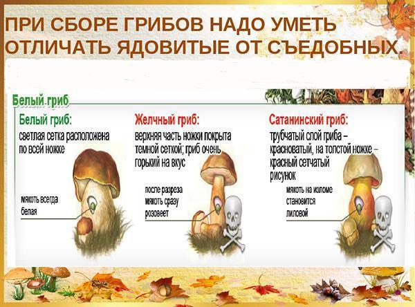учимся различать хорошие и плохие грибы