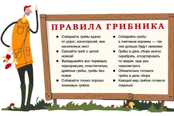 основные правила грибника