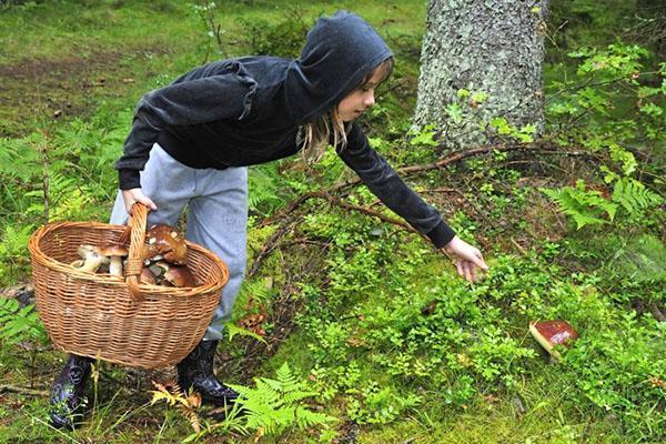 грибы рядом с деревом