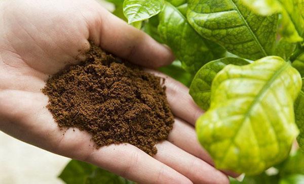 улучшаем качество почвы
