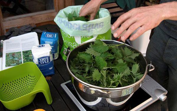 готовим настой крапивы для цветов