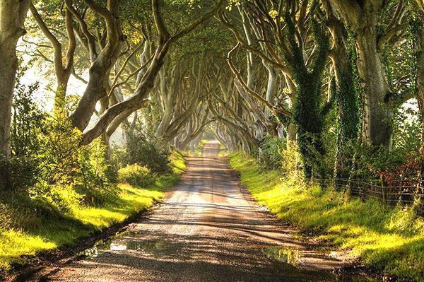 дорога среди букового леса