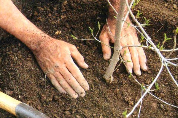 утрамбовываем почву