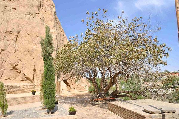 фисташковое дерево в курортном городе