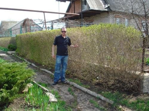 изгородь весной