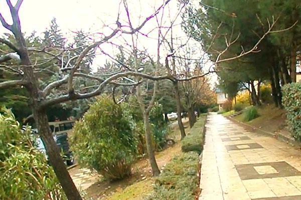 конфетное дерево в парке