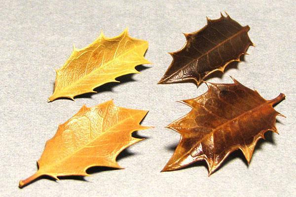 обработка листьев глицерином